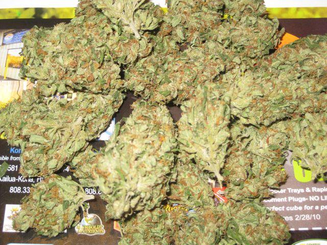 ググっても出ない「大麻」の真実! 理系が ...